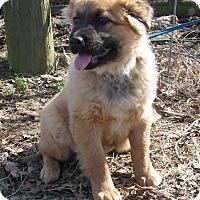 Adopt A Pet :: Twinkle - Hartford, CT
