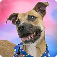 Adopt A Pet :: G.O. - Cincinnati, OH