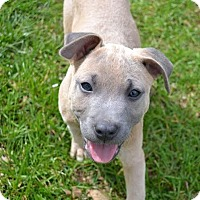 Adopt A Pet :: Jackson - Knoxville, TN