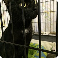 Adopt A Pet :: Ziggy - Byron Center, MI