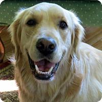Adopt A Pet :: Sky - New Canaan, CT