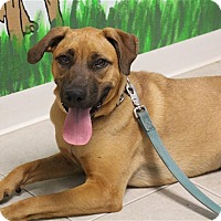 Adopt A Pet :: Madison - Elyria, OH