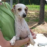 Adopt A Pet :: Magnolia - Groton, MA