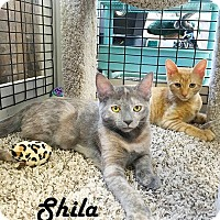 Adopt A Pet :: Shila and Smitty - Redwood City, CA
