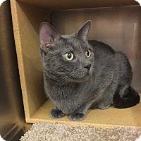 Adopt A Pet :: Sarah Jane -Pending! - Colmar, PA