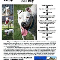 Dalmatian Mix Dog for adoption in Sacramento, California - Miley