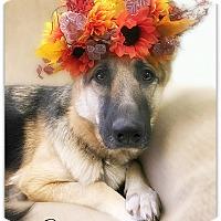Adopt A Pet :: Shasta - Pascagoula, MS
