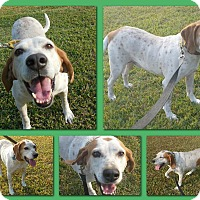 Adopt A Pet :: HANK - Sumter, SC