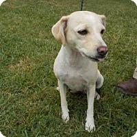 Adopt A Pet :: A009390 - Rosenberg, TX