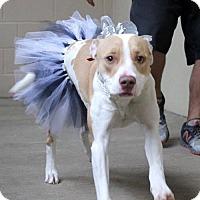 Adopt A Pet :: December - McKinney, TX