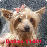 Adopt A Pet :: Dallas - Alexandria, VA