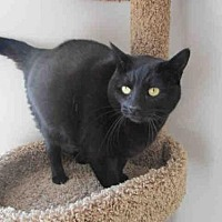 Adopt A Pet :: CICI - Fairfield, CA