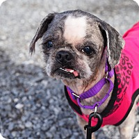 Adopt A Pet :: Mary - Whitehall, PA