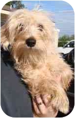 Terrier (Unknown Type, Small) Mix Dog for adoption in Hammonton, New Jersey - Sadie