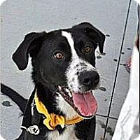 Adopt A Pet :: Chuck-Courtesy Post - Alpharetta, GA