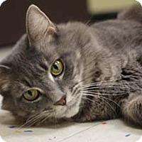 Adopt A Pet :: Fluff - Merrifield, VA