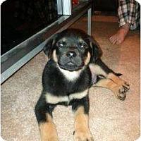 Adopt A Pet :: Oliver - Surrey, BC