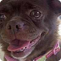 Adopt A Pet :: Rosie - Winchester, CA
