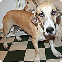 Adopt A Pet :: Benny - Wakefield, RI