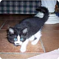 Adopt A Pet :: Jiko - Irvine, CA
