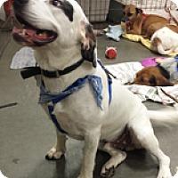 Adopt A Pet :: Harris - Alexis, NC