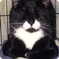 Adopt A Pet :: Moose - Vancouver, BC