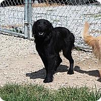 Adopt A Pet :: Jem - Windam, NH