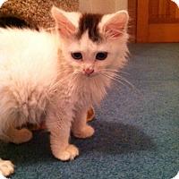 Adopt A Pet :: Flour &Sugar - Trevose, PA