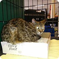 Adopt A Pet :: Mavis - Avon, OH