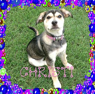 Siberian Husky/English Shepherd Mix Dog for adoption in Houston, Texas - Christi
