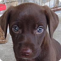 Adopt A Pet :: Minnie - Bedford, VA