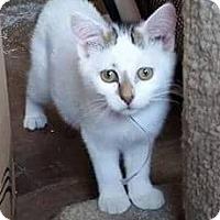 Adopt A Pet :: M&M - Putnam, CT