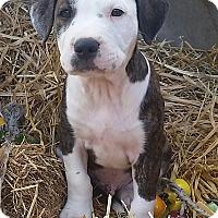 Adopt A Pet :: Garnet- Adoption Pending - Temecula, CA
