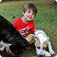 Adopt A Pet :: Bella - Sneads Ferry, NC