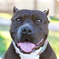 Adopt A Pet :: DUCKY - Kyle, TX