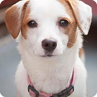 Adopt A Pet :: Jackie - Eugene, OR