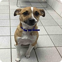 Adopt A Pet :: HARLEY - Canfield, OH