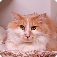 Adopt A Pet :: Fluffy Courtesy Post - Absecon, NJ
