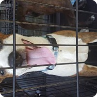 Adopt A Pet :: Rooney - Hartford, CT