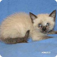 Adopt A Pet :: *MARIKO - Hanford, CA