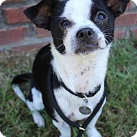 Adopt A Pet :: Missy - Atlanta, GA