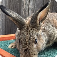 Other/Unknown Mix for adoption in St Helena, California - Peter Pan