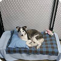 Adopt A Pet :: DIXIE - Port Clinton, OH