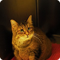Adopt A Pet :: Annabell - Everett, ON