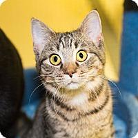 Adopt A Pet :: Morris - Seville, OH
