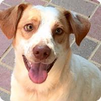 Adopt A Pet :: Griffin - Burlington, NC