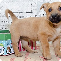 Adopt A Pet :: 1036 - Aurora, CO