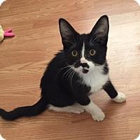 Adopt A Pet :: Harley Quinn - Glendale, AZ