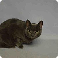 Adopt A Pet :: Lilly - Hudson, NY