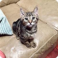Adopt A Pet :: Bob - Novato, CA